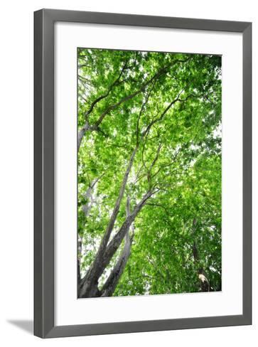 Green on Air-Philippe Sainte-Laudy-Framed Art Print
