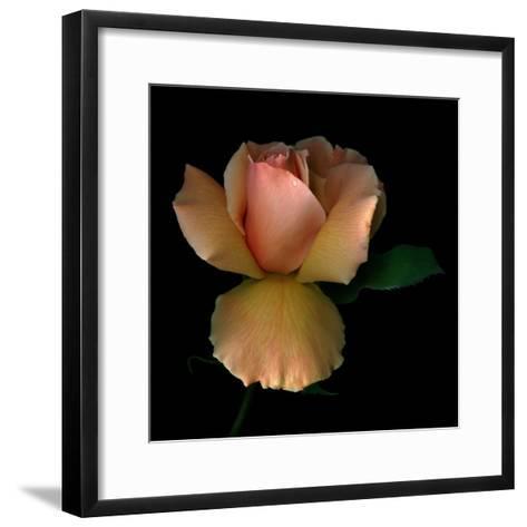 Rose 2-Magda Indigo-Framed Art Print