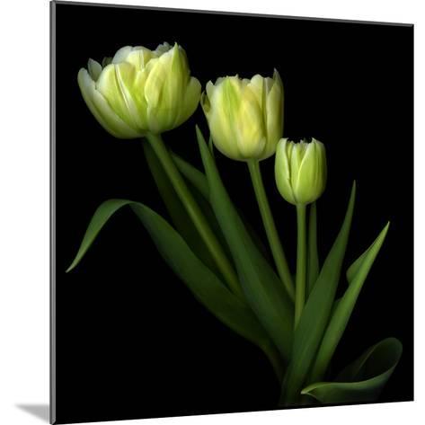 Yellow Tulips-Magda Indigo-Mounted Photographic Print