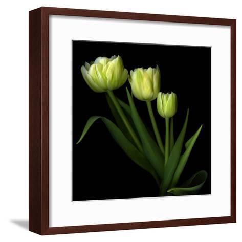 Yellow Tulips-Magda Indigo-Framed Art Print