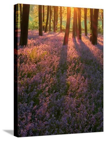Bluebell Sunset II-Doug Chinnery-Stretched Canvas Print
