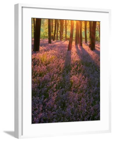 Bluebell Sunset II-Doug Chinnery-Framed Art Print