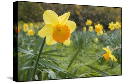 Focusing on Spring-Adrian Campfield-Stretched Canvas Print