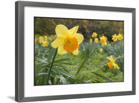 Focusing on Spring-Adrian Campfield-Framed Art Print