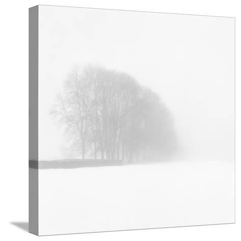 Snowy Trees-Doug Chinnery-Stretched Canvas Print