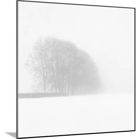 Snowy Trees-Doug Chinnery-Mounted Photographic Print