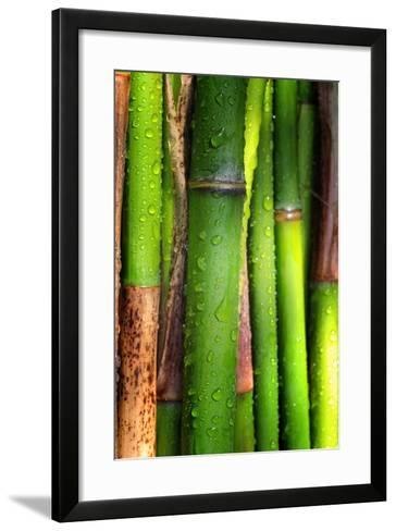 Bamboos Crying-Philippe Sainte-Laudy-Framed Art Print