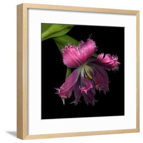 Pink Frazzled Tulip-Magda Indigo-Framed Art Print