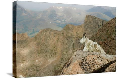 Rocky Mountain Goat-Robin Wilson Photography-Stretched Canvas Print