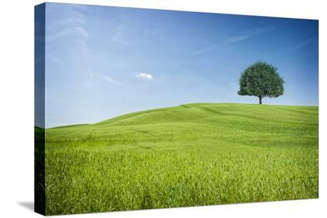 Tuscan Hills-www.andreakamal.com-Stretched Canvas Print
