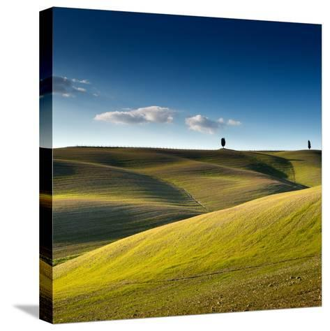 Cypress Trees on Top of Rolling Field and Blue Sky-Michele Berti-Stretched Canvas Print