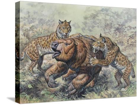 Smilodon Dirk-Toothed Cats Attacking a Glossotherium--Stretched Canvas Print