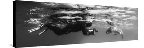 Diver Comes Face to Face with a Leopard Seal, Astrolabe Island, Antarctica--Stretched Canvas Print