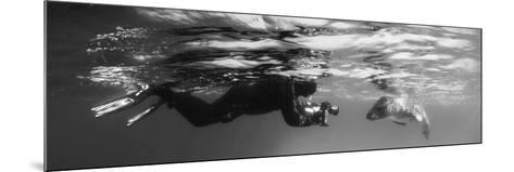 Diver Comes Face to Face with a Leopard Seal, Astrolabe Island, Antarctica--Mounted Photographic Print