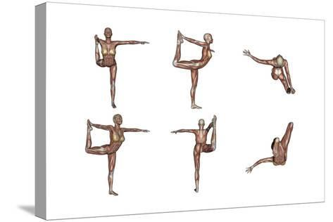 Six Different Views of Dancer Yoga Pose Showing Female Musculature--Stretched Canvas Print