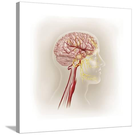 Detail of Ateries of the Human Head and the Trigeminal Nerve--Stretched Canvas Print