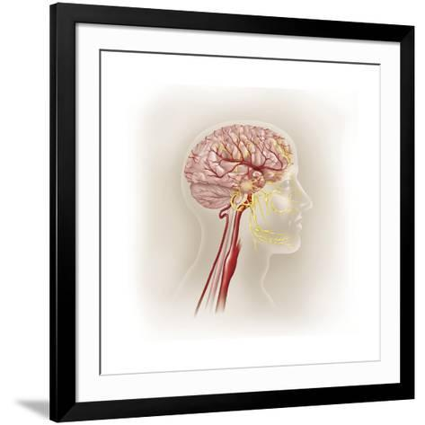 Detail of Ateries of the Human Head and the Trigeminal Nerve--Framed Art Print
