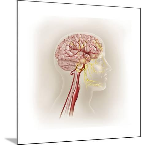 Detail of Ateries of the Human Head and the Trigeminal Nerve--Mounted Art Print