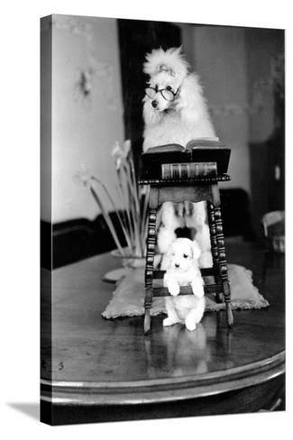 Two Poodles-Carl Sutton-Stretched Canvas Print