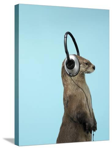 Sea Otter Listening to Headphones-Andy Reynolds-Stretched Canvas Print
