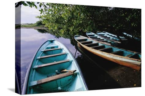 Tour Boats Moored in Ventanilla Lagoon-Danny Lehman-Stretched Canvas Print