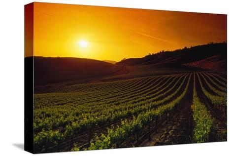 Vineyards at Sunset-Charles O'Rear-Stretched Canvas Print