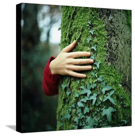Tree Hugger-Michael Prince-Stretched Canvas Print