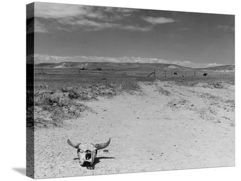 Over Grazed Land-Arthur Rothstein-Stretched Canvas Print