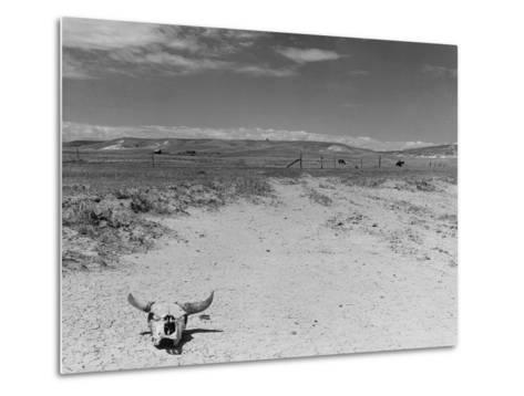 Over Grazed Land-Arthur Rothstein-Metal Print