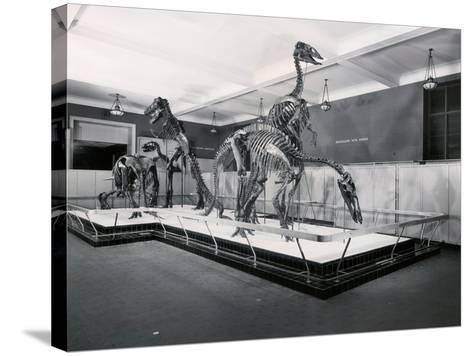 View of Tyrannosaur Skeletons in Museum--Stretched Canvas Print