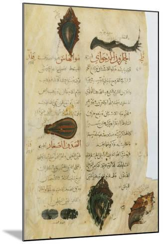 Pedanius Dioscorides, Illuminated Page, 11th Century--Mounted Giclee Print