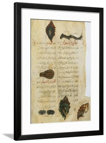 Pedanius Dioscorides, Illuminated Page, 11th Century--Framed Art Print