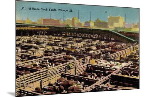 Chicago Illinois Usa, Part of Union Stock Yards, Houses, Rinder--Mounted Giclee Print
