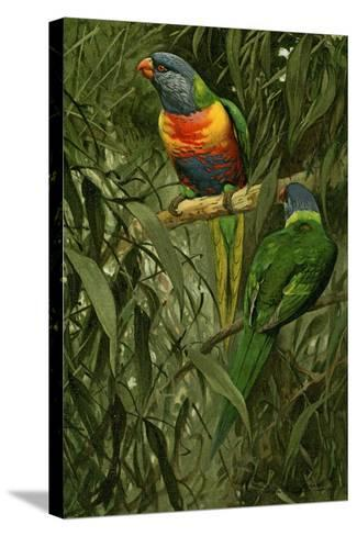 A Pair of Rainbow Lorikeets, 1890-Alfred Brehm-Stretched Canvas Print