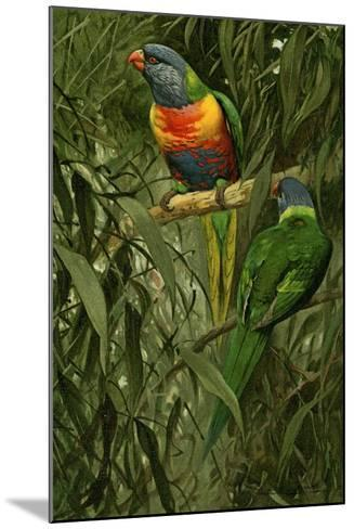 A Pair of Rainbow Lorikeets, 1890-Alfred Brehm-Mounted Giclee Print