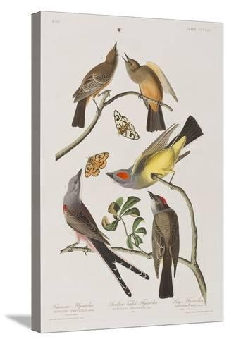 Illustration from 'Birds of America', 1827-38-John James Audubon-Stretched Canvas Print