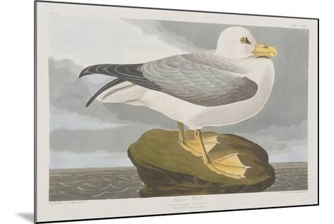 Illustration from 'Birds of America', 1827-38-John James Audubon-Mounted Giclee Print