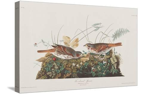 Illustration from 'Birds of America', 1827-38-John James Audubon-Stretched Canvas Print