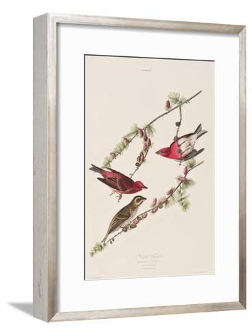 Illustration from 'Birds of America', 1827-38-John James Audubon-Framed Art Print