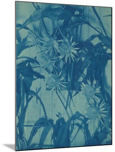 Floral Study, C.1900-Louis Comfort Tiffany-Mounted Giclee Print