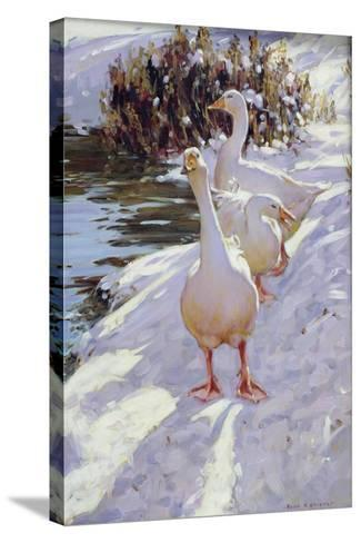 Geese in Snow-Paul Gribble-Stretched Canvas Print