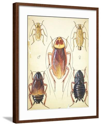 Poster of Household Insects--Framed Art Print