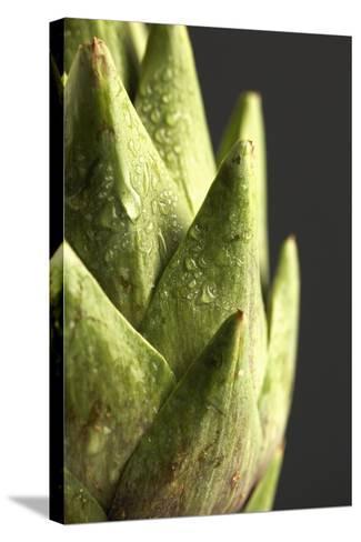 Artichoke Leaves--Stretched Canvas Print
