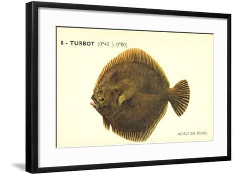 Künstler Fische, Institut Des Peches, Turbot, Flunder--Framed Art Print