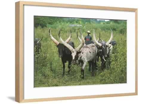 Grazing Cattle, Entebbe, Uganda--Framed Art Print