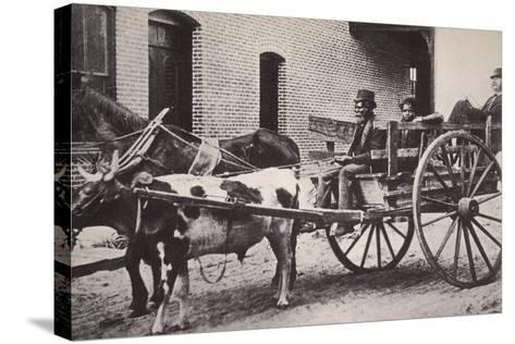 Mark Twain in the Back of a Horse and Ox Drawn Cart, Turn of the Century--Stretched Canvas Print