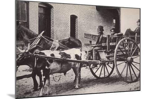 Mark Twain in the Back of a Horse and Ox Drawn Cart, Turn of the Century--Mounted Photographic Print