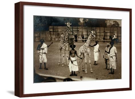 Giraffes and their Somali Handlers, C.1905--Framed Art Print