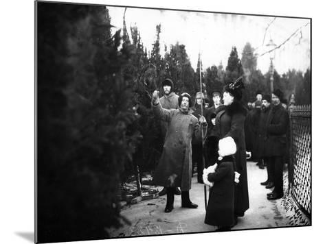Christmas Trees for Sale, St Petersburg, C.1913--Mounted Photographic Print