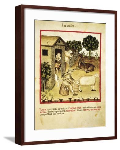 Milking Sheep, Miniature by Giovannino De Grassi from the Tacuinum Sanitatis--Framed Art Print